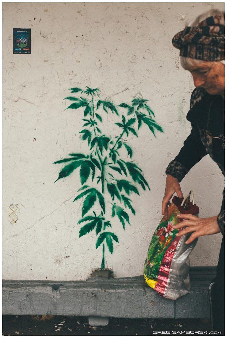 Pot Plant Graffiti