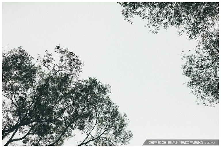 Amongst Trees Again