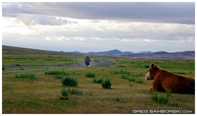 Cow and Motorbike Mongolian Road